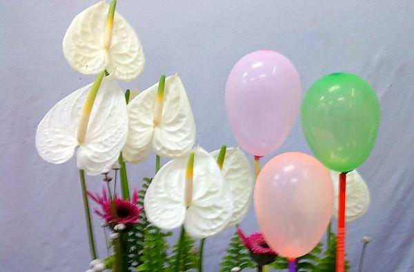 hoa hong mon trang