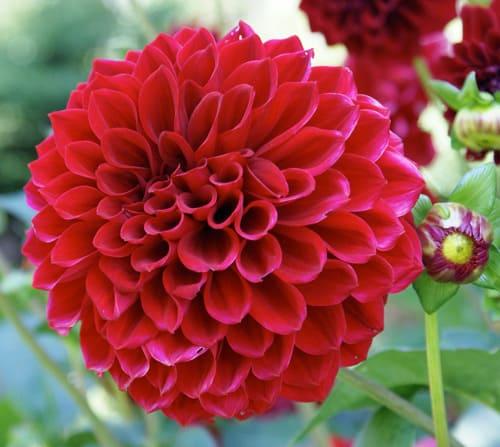 y nghia hoa thuoc duoc 2