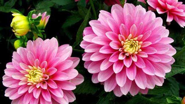 y nghia hoa thuoc duoc 1