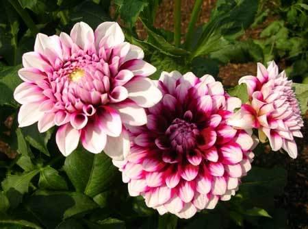 y nghia hoa thuoc duoc