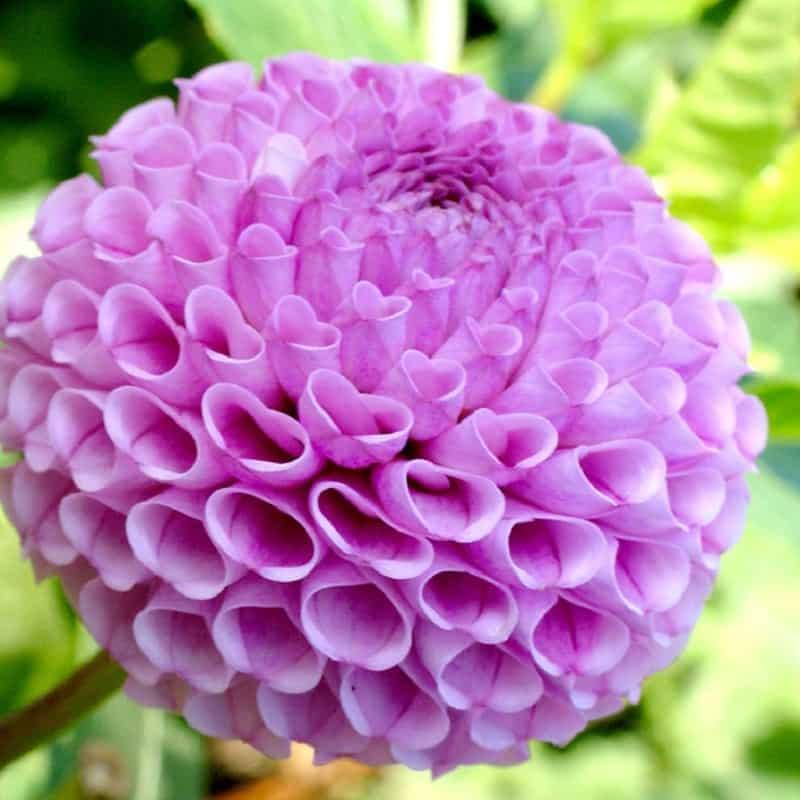 y nghia hoa thuoc duoc 3