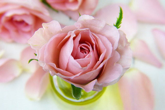 hinh anh hoa dep