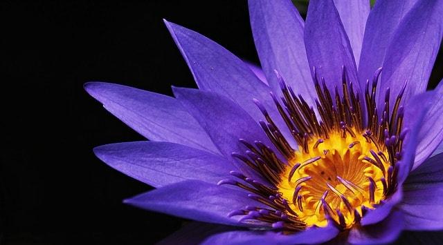 hinh anh dep hoa sung