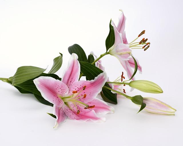 hoa ly dep nhat 1