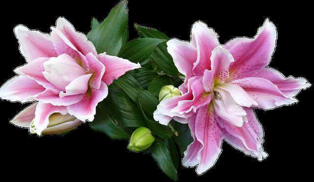 anh dep hoa ly