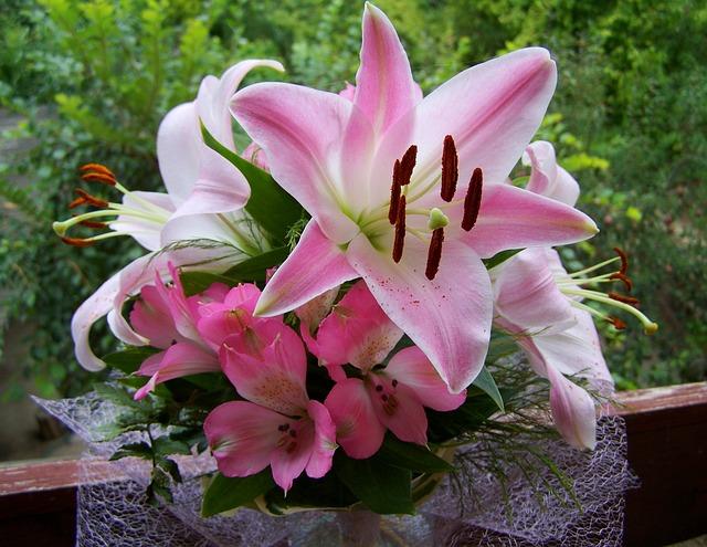 bo hoa ly dep