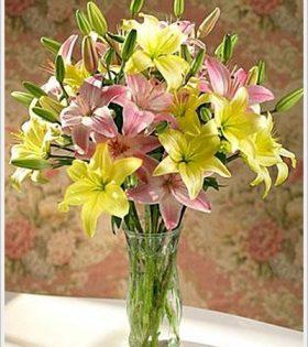 binh hoa ly