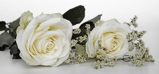 hinh anh dep hoa hong trang