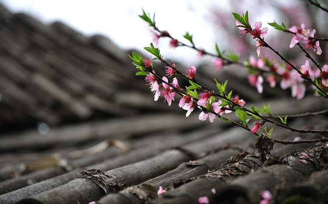 y nghia hoa dao