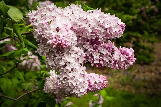 hoa tu dinh huong y nghia