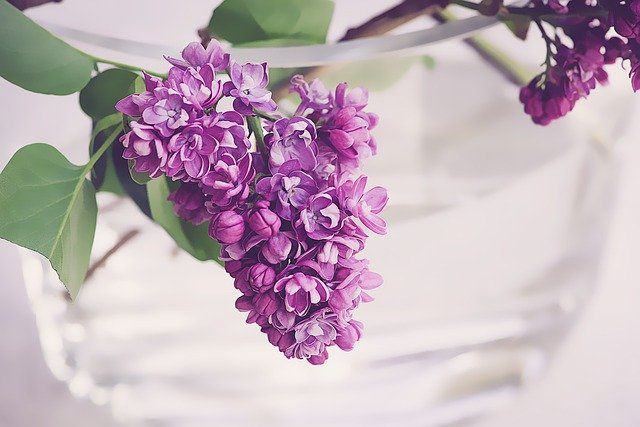 su tich hoa tu dinh huong