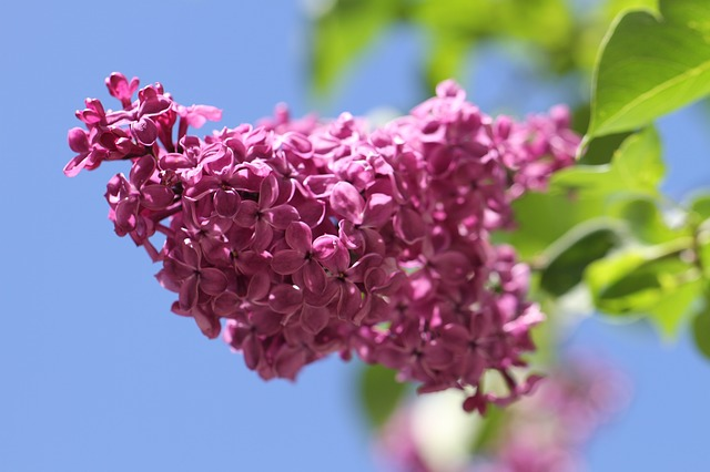y nghia hoa tu dinh huong la gi