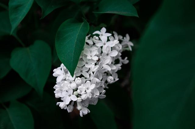 y nghia hoa tu dinh huong